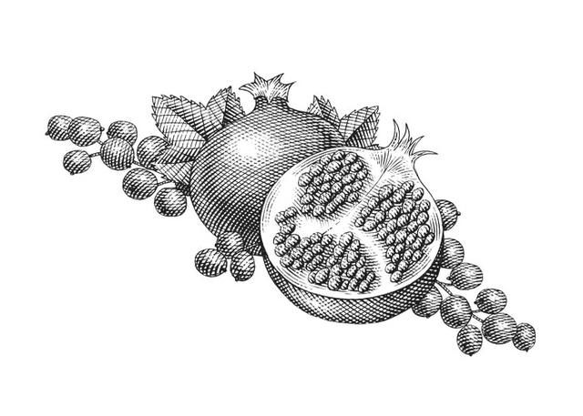 pomegranate drawing by steven noble